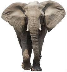 elephantroom.png
