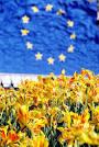 euflowers.jpg